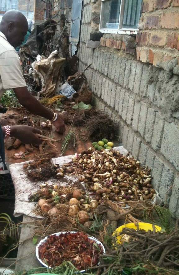Preparing and drying out freshly dug traditional medicines