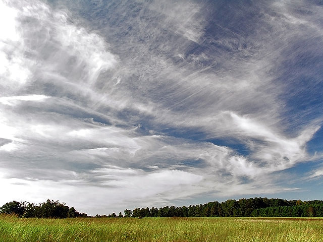 sky filled with many types of cirrus clouds