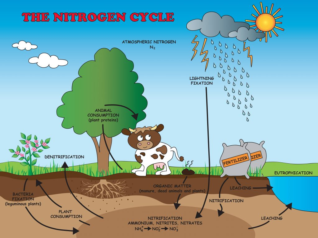 Nitrogen Cycle For Kids