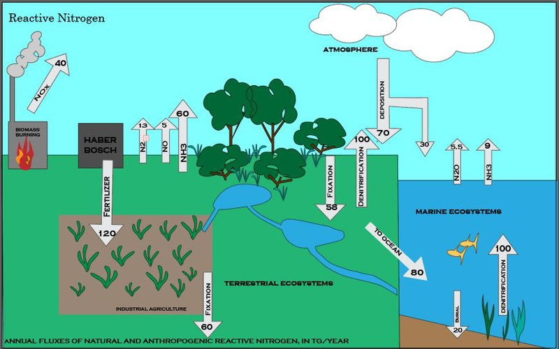 Nitrogen Cycle Facts For Kids  Explained